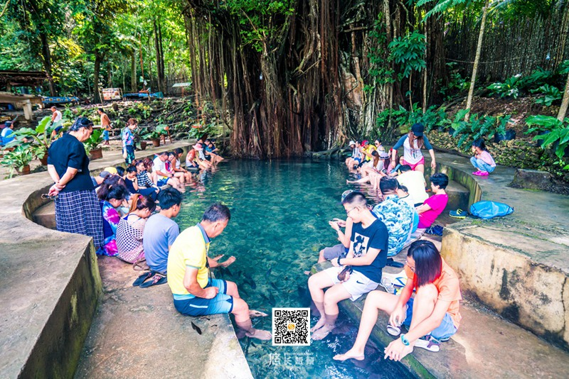 大榕树-Century Old Balete Tree (2)